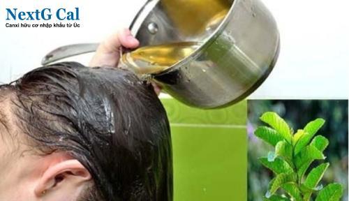 Mẹo trị rụng tóc sau sinh bằng lá ổi