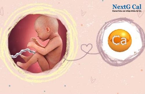 có nên uống canxi trước khi mang thai